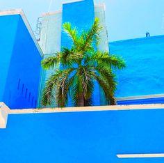 Palmera. #Centro #Perspectiva #Campeche