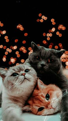 Cute Baby Cats, Cute Little Animals, Cute Funny Animals, Kittens Cutest, Cats And Kittens, Wallpaper Gatos, Cute Cat Wallpaper, Animal Wallpaper, Plain Wallpaper