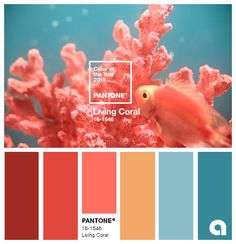 10 decorating trends for 2019 Pantone, an American company that develops color systems and dictates color trends around the world, has chosen Living Coral as the 2019 color. The color is a warm and fu Coral Colour Palette, Vintage Colour Palette, Vintage Colors, Colour Schemes, Color Trends, Pink Color, Beach Color Schemes, Summer Color Palettes, Orange Color Palettes