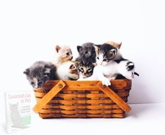 Cute Kittens, Cats And Kittens, Kitten Toys, Cat Toys, Cool Cats, First Time Cat Owner, Best Cat Breeds, Gatos Cool, Cat Skin