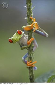 frog on a stick