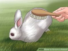 Image titled Groom a Rabbit Step 3