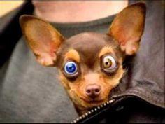 animais engraçados - Pesquisa Google