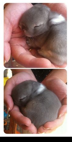 cute-overdose: Sleepy little babies more cute pics here BUN BUNZ (via lionversusbear-deactivated20141)