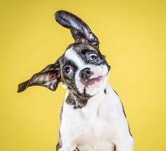 Fotograaf Carli Davidson is wereldberoemd vanwege haar foto's waarin ze prachtige momentopnamen maakt van schuddende honden.
