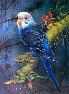 parakeet in tropical setting Exotic Birds, Colorful Birds, Bird Drawings, Animal Drawings, Pretty Birds, Beautiful Birds, Beautiful Images, Tier Fotos, Bird Pictures