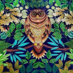 owl jardim secreto