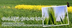 싱그러운 초록물결 일렁이는 고창 청보리밭 - 봄이 깊어지기도 전에 여름이 달려왔다. 미처 느끼지 못한 봄의 싱그러운 초록이 그립다면? 고창 청보리밭에서 봄의 제맛을 느껴보자.