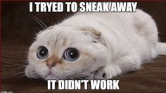 When you try to sneak away when you messed up at work.  #TheRoughneck #Oilfiled #Work #CatMeme #OilfieldMeme
