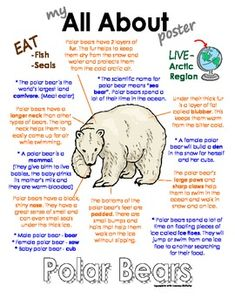 My All About Polar Bears Book - (Arctic/Polar Animals) from Courtney McKerley on… Polar Bear Facts, Penguins And Polar Bears, Bears Preschool, Polar Animals Preschool Crafts, Preschool Winter, Preschool Themes, Artic Animals, Arctic Wolf, Arctic Hare