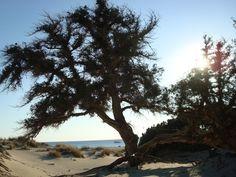 Elafonisos beach - a tree on the beach...