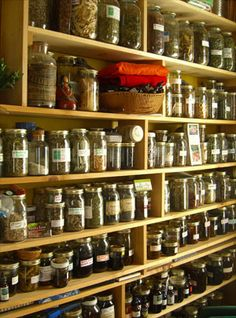 Resource Guide: Harvesting Your Medicine | Numen: The Healing Power of Plants