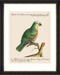 Tablou Framed Art Parrots Of Brazil 01 - Luisa Wall Art Sets, Framed Wall Art, Framed Art Prints, Fine Art Prints, Luxury Loft, Bird Book, Mind The Gap, Paper Frames, The Ordinary