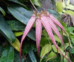 珍しい花(神代植物公園の温室 2013/09/14) - homanのブログ