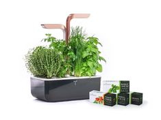 Autonomous indoor garden for aromatic herbs, flowers and baby vegetables all year round without any effort. The garden set-up is easy and fast. Organic Soil, Organic Seeds, Hydroponic Growing, Growing Plants, Edible Plants, Edible Flowers, Types Of Basil, Vegetables For Babies, Container Herb Garden