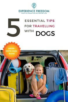 In summertime the temperatures can soar and it's important to keep your pets safe. We've put together some essential tips to help you when travelling with your dogs. Glamping Uk, Glamping Holidays, Uk Board, Dog Enrichment, Dog Travel, Pet Safe, Day Trip, Dog Friends, Motorhome