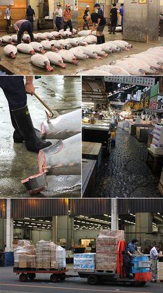 Tsukiji Fish Market, Japan Tsukiji, Food Hacks, Travelling, Tokyo, Good Food, Collage, Good Things, Japan, Fish