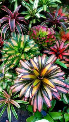 Natures colourful displays