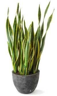 78+ images about Kamerplanten Slaapkamer on Pinterest | Met, Plants and Van