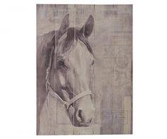 Portrait Horse Kép 50x70 cm