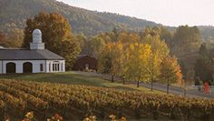 Barboursville Vineyards..........so close to one of my bestest friends!