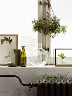 Beautiful greens by the window, styled by Josefin Haag and photographed by Kristofer Johnsson. Interior Desing, Home Interior, Interior Styling, Interior Inspiration, Interior And Exterior, Interior Decorating, Inspire Me Home Decor, Nature Green, Green Windows