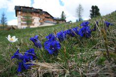 Alm-Blumenkunde