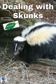 Garden Rx shows you the best way to get rid of your skunk problem without cages or traps.