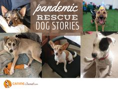 Sad Dog Stories, Rescue Dogs, Animal Rescue, Family Dogs, Happy Dogs, Puppy Love, Chihuahua, Homes, Pets