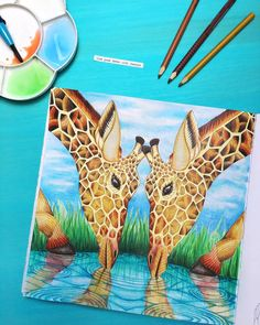 549 отметок «Нравится», 37 комментариев — Irena (@black_aneri) в Instagram: «Giraffes - such beautiful creatures! Book: #wildsavannah by #milliemarotta Pencils:…»