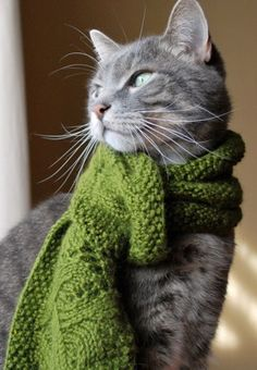 Knitting Project - A cool green ruffled scarf