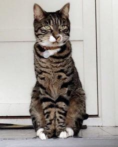 Cats, Animals, Instagram, Gatos, Animales, Animaux, Animal, Cat, Animais