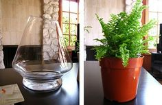Terrariums 101.  I have never made a terrarium, think I will use these instructions and do it.