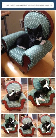Don't Call it a Bark-Alounger!  -  how cute is this, itty bitty tuxedo kitty has a chair that's the perfect size