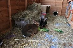 Care for rabbits in cold weather & snow by RWAF | Barks & Bunnies