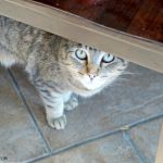 Ten Important Everyday Cat Jobs
