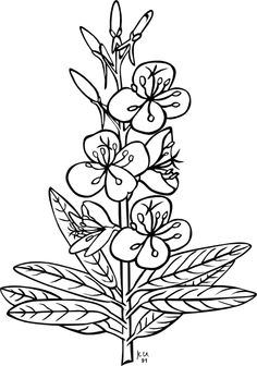 bluebonnet coloring page eassumecom httpwwwclkercomcliparts0a