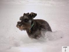 Gabe kicking up the snow!