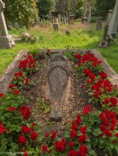 A Bed of Red.......Warriston Cemetery, Edinburgh, Scotland. 20th August 2015.