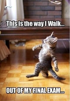 This is the way I walk out of my final exam. #exams #examination #test #education #funny