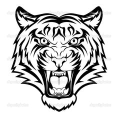 white tiger drawings | White Tiger Face Drawing