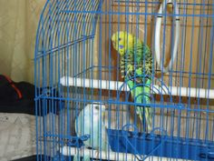 Bluedu & Rikky