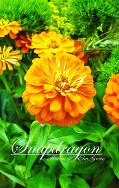 orange zinnias and green trick