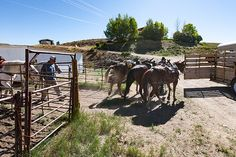 4D/3N Pack Trip - West Elk Wilderness http://ift.tt/1SYUgnR