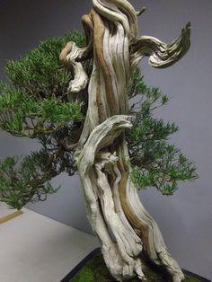 El bonsái y yo: Otro enfoque, detalles