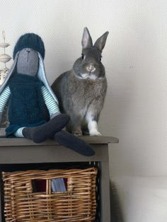 Les 5 sens. Comportement du lapin de compagnie - La dure vie du lapin urbain
