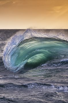 MORPHLING on 500px by William Patino, Wollongong, Australia ☀ ILCE-7R-f/5-1/1000s-200mm-iso200, 600✱900px-rating:99.5 ◉ Photo location: Google Maps