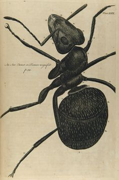 Robert Hooke, 1635-1703. Micrographia restaurata: or, The Copper-plates of Dr. Hooke's Wonderful Discoveries by the Microscop. 1745