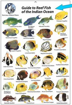 These 3 Types Of Tropical Fish Are Best As Pet Tropical