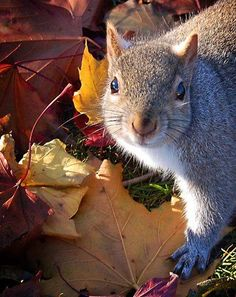 excuse me...I am rather busy gathering nuts
